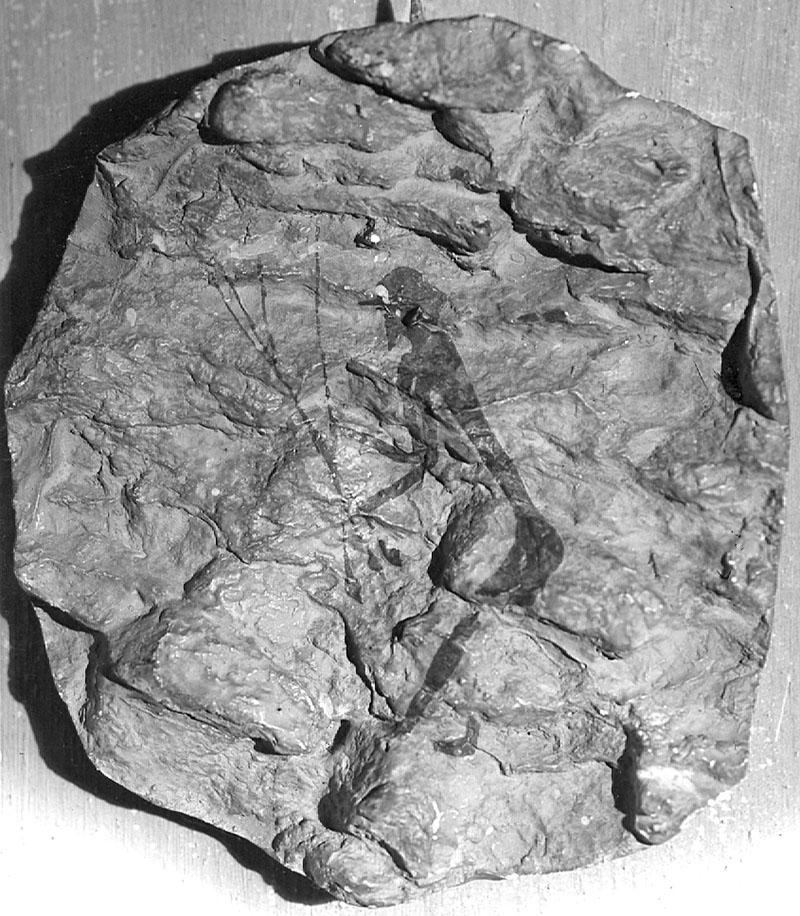La Saltadora (Valltorta, Castelló). Copia en relleu d'un arquer. Obra desapareguda. MAC. Arxiu Històric i Fotogràfic