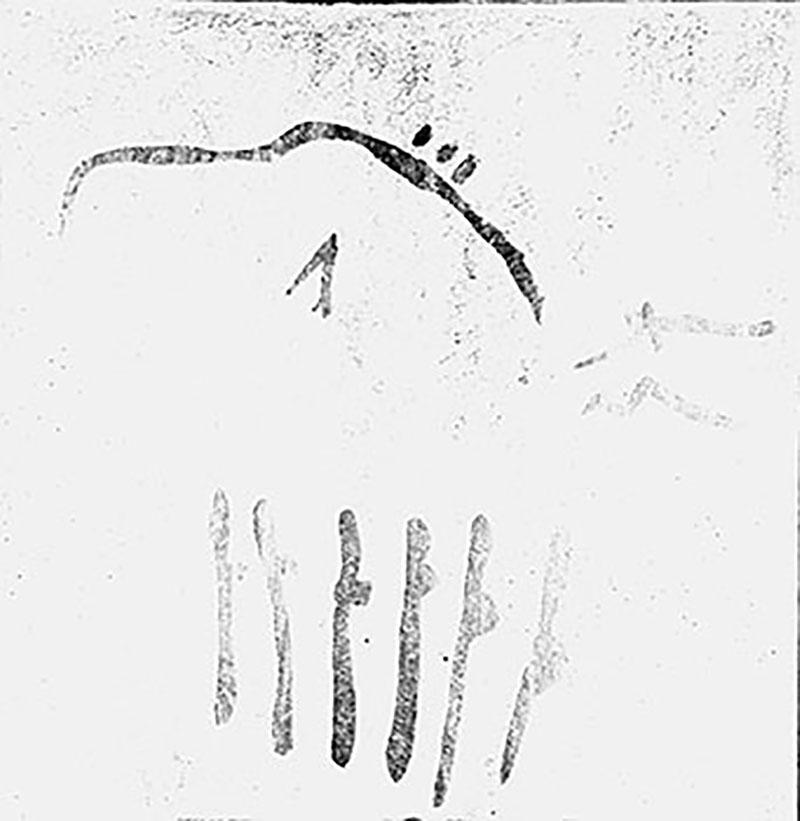 Cova del Pindal (Pimiango-Colombres, Astúries). Bisó gravat i pintat, i altres figures. MAC. Arxiu Històric i Fotogràfic