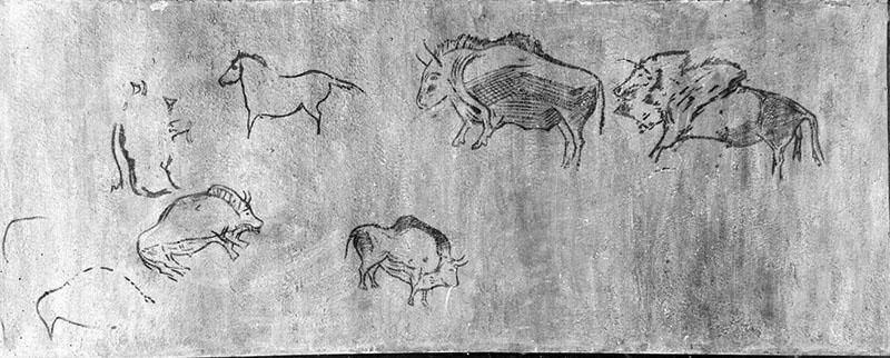 Santimamiñe (Cortézubi, Biscaia). Figures de bisons i cavalls pintats en negre. MAC. Arxiu Històric i Fotogràfic