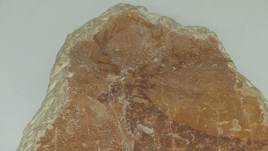 Figura 20B. Detalle de la reintegración cromática del mortero de cemento en el extremo superior de unión de la fractura. Tras la reintegración cromática y la limpieza, se puede observar cómo mejora la visualización de la cornamenta del ciervo tras la intervención.
