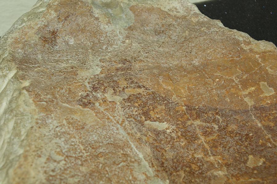 Figura 5. La capa de suciedad superficial oculta la parte superior de la figura, correspondiente a los cuernos del animal.